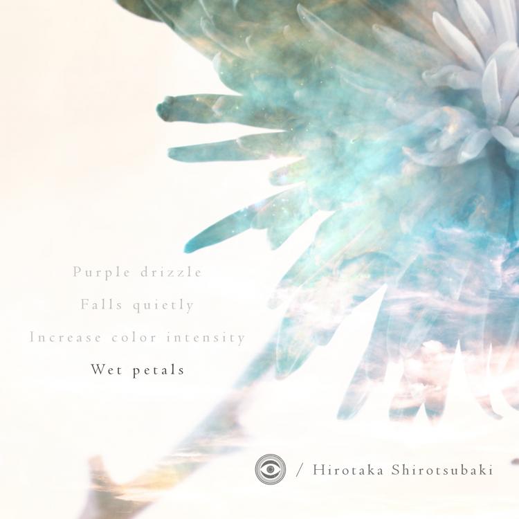 Hirotaka Shirotsubaki - Wet Petals - cover